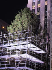2017 Christmas Tree Rockefeller Center NYC 3634 (Brechtbug) Tags: 2017 christmas tree rockefeller center before lights 11112017 nyc 30 rock new york city standing up above ice rink with snow shoveling workers skating holiday decoration ornaments night lites light oversize load ornament prometheus gold mythological statue sculpture fountain fountains scaffolding scaffold pre thanksgiving