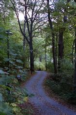 road in the woods (Mister.Marken) Tags: nikonf4 kodakportra 400vc afnikkor50mm