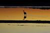 Sunset Morocco_2411 (ichauvel) Tags: coucherdesoleil sunset oiseau bird océanatlantique lagune reflets reflections lumiére light maroc morocco afriquedunord northafrica magreb voyage travel novembre november moulaybousselham ornithologie