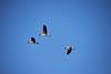 Oktober vluchten (Ginkgo-Biloba) Tags: oche ganzen