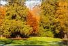 7D2_4467-Edit (Colin RedGriff) Tags: autumn virginiawater englefieldgreen england unitedkingdom gb