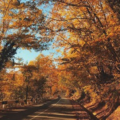 GOLDEN AUTUMN IN in #Sochi (One to Russia) Tags: onetorussia tour tours tourist autumn travel adventure traveling travelgram travellife travelrussia traveltorussia showmerussia inrussia lovelyrussia instagramrussia welcometorussia awesomerussia natgeorussia russianature hotels rusplaces trip сочи