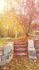 Find Your Way (m m_pics) Tags: autumn colors path saveearth nature beauty beautiful natur wald weg herbst farben farbenpracht steine steinmauer