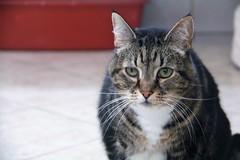 Oscar - 14 year old neutered male