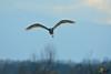 A-LUR_2130 (OrNeSsInA) Tags: trasimeno uccelli bird natura italia umbria castiglionedellago ornessina lucarosi nikon tamron byrd lago chiusi siena perugia aironi cormorani