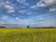 Felder auf der Schwäbischen Alb (Blende2,8) Tags: germany swabiancountryside forest trees clouds sky landscape himmelwolken blumen felder bäume wolken badenwürttemberg deutschland iphone himmel