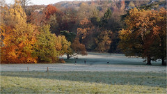323.4 Just after sunrise 4 (Dominic@Caterham) Tags: frost people dog autumn shadows sunrise leaves