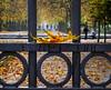 Parc Royal (143/365) (chando*) Tags: 365 automne autumn brussels bruxelles fall fallenleaves feuillemorte feuillesmortes gate grille parcroyal project365