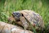 Don't give me that look! (pg_art) Tags: wildlife woods eyes eye depthoffield texture outdoor nature nikon sigma bokeh pgart amazing animal macroworld macro macrodreams d750 grass ngc closeup turtle