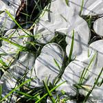 Frozen Puddle - Flaque gelée thumbnail