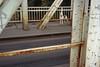 Budapest (husky on K-híd), 2001 (Joseff_K) Tags: khíd budapest husky chien dog pont bridge sziget island ile