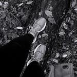 Waldspaziergang 🍃 thumbnail