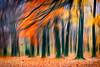Trials and tribulation II (Ans van de Sluis) Tags: leaf landscape trials tribulation autumn fall ansvandesluis art fineart storm stormy wind blur painterly