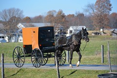 Off We Go. New Wilmington, PA (bobchesarek) Tags: buggy horse amish padutch harness farm pennsylvania