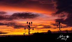 coucher dde soleil au Plessis (touflou) Tags: coucherdesoleil sky nuages ciel orange clouds