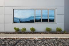 Vortex (John Pettigrew) Tags: lines tamron d750 2470mm window bush reflection abstract disymmetry minimal space clean plant tree mundane new banal landscape wall nikon documenting topographic