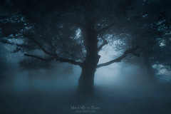 They are alive (Mimadeo) Tags: scary dark fog night forest nightmare horror lost fear mood moody atmosphere atmospheric ghost monochrome blue landscape magic tree shadow light evening nature mystery mist spooky foggy darkness misty halloween woods evil creepy fantasy gothic mysterious surreal silhouette enchanted moonlight bare haunted eerie
