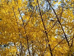 Walks Piedmont Park - 42 (Laura Grace) Tags: 2017 afternoon atl atlanta autumn beauty fall ga georgia november solowalkshikes virginiahighland walksandhikes