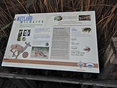 sign Center for Wildlife Ed ncwetlands KG (11) (ncwetlands.org) Tags: northcarolina barrierisland tidalmarsh brackishmarsh curritucksound boardwalk lighthouse freshwaterwetland ncwetlands
