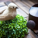 Fake bird and garden watering can thumbnail