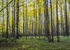 Golden autumn (Sergey Lobkarev) Tags: nikonrussia wildleafs autumn chernovodka nationalgeographic natgeophotos russiannature shutterstock 500px
