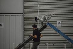 DSC_6660 (jaimekay16) Tags: dog agility k9x k9 xpress leander texas