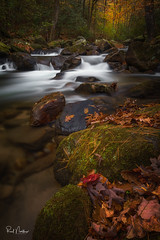 Jones Gap State Park (Reid Northrup) Tags: fallcolor autumn cascade fall forest jonesgap landscape leaves longexposure rocks southcarolina tree trees water color nikon rrs reidnorthrup jonesgapstatepark