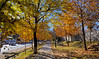 Autumn in Abbottabad (Shehzaad Maroof Khan) Tags: autumn abbottabad autumninpakistan fall walk day light colors cant path road roadside trees kpk beautifulpakistan pakistan