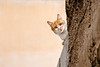 IMG_4765.JPG (esintu) Tags: urfa cat kedi minimal wall