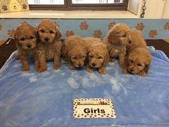 Roxie Girls pic 3 12-10