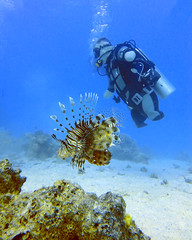 quadruple amputee man takes diving course 08 (KnyazevDA) Tags: disability disabled diver diving deptherapy undersea padi underwater owd redsea buddy handicapped aowd egypt sea wheelchair travel amputee paraplegia paraplegic