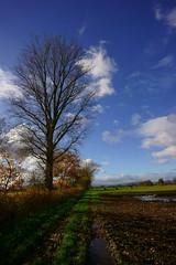 Herbstimpressionen (Lutz Blohm) Tags: herbstimpressionen herbststimmung herbstsonne herbstidylle herbst zeissbatis18mmf28 sonyalpha7aii