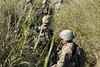 3rd Cavalry Regiment conducts field training exercises (3d Cavalry Regiment) Tags: infantry forthood 3rdcavregt soldiers trainingexercise teamwork stryker