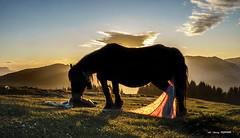 Parto en Urkiolamendi (Jabi Artaraz) Tags: jabiartaraz yegua horse parto potro urkiolamendi atardecer nature