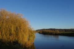 24 Nov 2017 (8) (AJ Yakstrangler) Tags: yakstrangler trees rivertrent