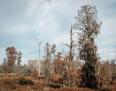 Swamp and birds (ep_jhu) Tags: augusta trees x100f phinizyswamp hazy tree georgia nature birds fuji thanksgiving park ga swamp fujifilm white