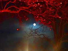 Advent, Advent. (peterpe1) Tags: moon mond vollmond flickr peterpe1