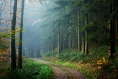 MyBelovedHomelandWoods (BphotoR) Tags: bphotor fog nebel woods forst forest germany