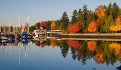 Yacht Club Reflections (Sworldguy) Tags: vancouver yachts sailboat reflections autumn colorful fallcolors stanleypark mirror water waterfront fall bc britishcolumbia harbour waterscape city boats canada nikon d7000 dslr outdoors serene ocean trees leaves landscape