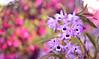 283 - DSC_3782 (bbvn_1) Tags: nikon d610 sigma orchid flower 50mm 14