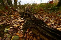 Herbstmotive (Lutz Blohm) Tags: herbststimmung herbst herbstimpressionen herbstidylle herbstsonne zeissbatis18mmf28 sonyalpha7aii