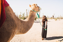 "Follow me. (¡arturii!) Tags: wow amazing awesome superb interesting stunning impressive nice beauty great arturii arturdebattk ""canonoes6d"" gettyimages travel trip tour route viatge holidays vacations animal camel desert morocco marroc marruecos africa woman walking cool wonderlust landscape nature outdoor palmtree cute hairy sunny day marrakesh marrakech"
