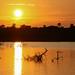 Sundown at Zambesi