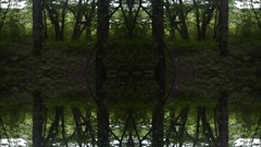 Nature Trance (Josh Rokman) Tags: kaleidoscope kaleidoscopevideo trance surreal surrealart nikond7000 photoshop psychedelic psychedelicart psychedelicvideo nature woods forest musicvideo videoart video hdvideo slrvideo dslrvideo