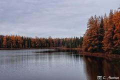 171025-18 Le mélèze en automne (clamato39) Tags: lac lake eau water ciel sky clouds nuages nature forest forêt autumn automne provincedequébec québec canada