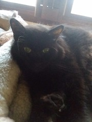 Storm (mariaappleby) Tags: champaign ckcc cat cats httpstwittercomckcc httpsmariaapplebywordpresscom il illinois