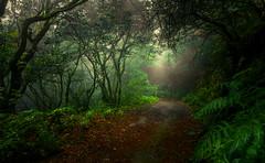 El camino.... (JACRIS08) Tags: