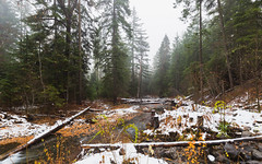 Meeting Of The Minds (John Westrock) Tags: nature trees forest river stream winter snow fog foggy washingtonstate pacificnorthwest canoneos5dmarkiii canonef1635mmf4lis