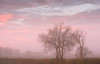 Spin Sugar (Sarah_Brooks) Tags: landscape misty mist autumn tree trees mistymonring pink pastel somerset