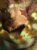 Clam Hugger (PacificKlaus) Tags: siquijor philippines apodiver ocean underwater scuba diving nature tridacna scorpionfish scorpaenopsis fish